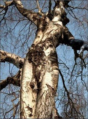 Pareidolias graciosas Psima054